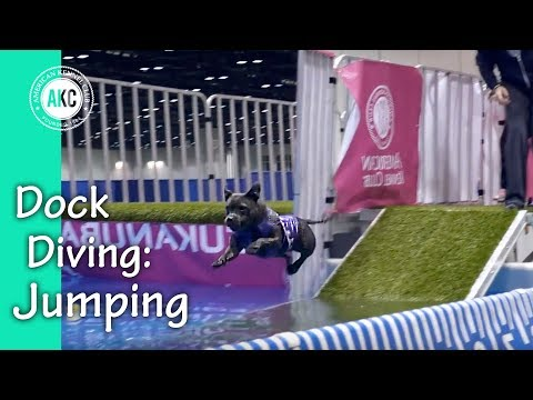 Dock Diving How-To Steps # 2/3: Jumping Off the Dock
