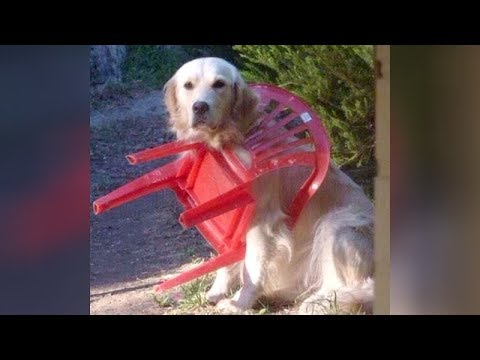 FUNNY ANIMALS, they just NEVER FAIL TO MAKE US LAUGH! - Funny ANIMAL VIDEOS