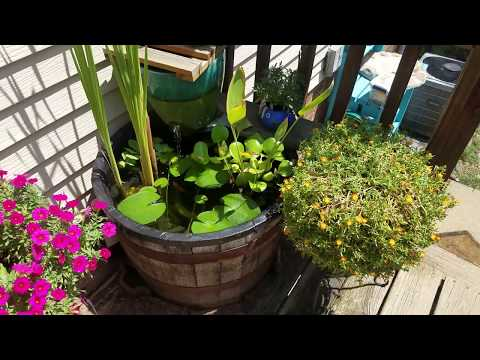 Whiskey Barrel Pond with Goldfish & Live Plants