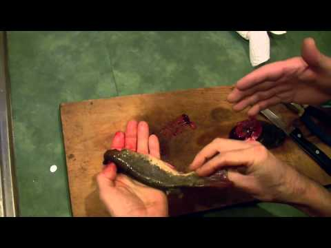 How To Fillet a Bullhead Catfish in Two Easy and Simple Ways
