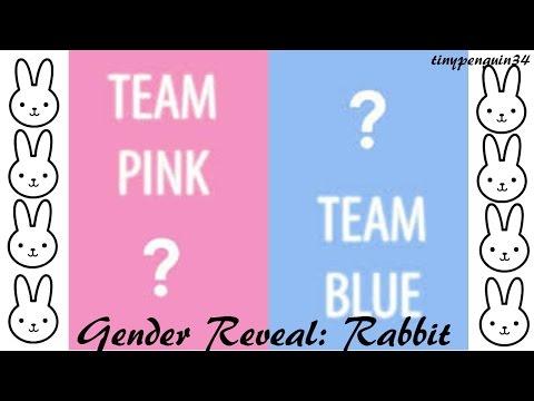 ~RABBIT GENDER REVEAL~