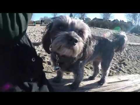 GoPro Dog Park Vancouver