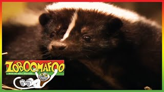 🐵🐒 Zoboomafoo 139 | Stinky | Animal shows for kids | Top Full Episode | HD 🐵🐒