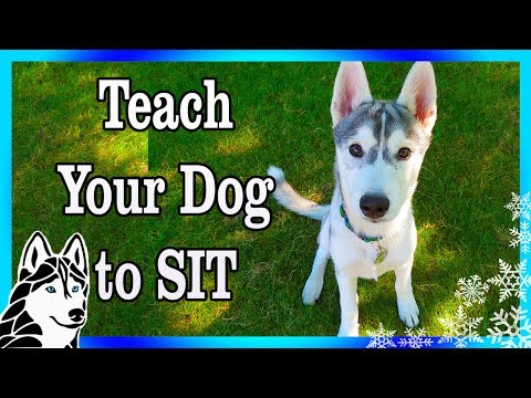 How to teach your dog to SIT , LAY DOWN, and STOP BITING | Dog Training