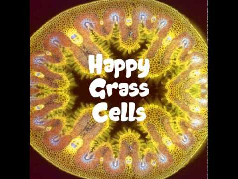 Grass Cells Under a Microscope: Happy Faces