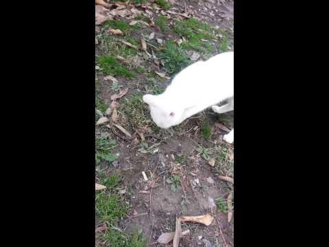 Cat kills garter snake!!