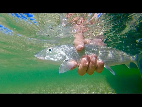 Fly Fishing For Bonefish in Ambergris Caye (San Pedro) Belize
