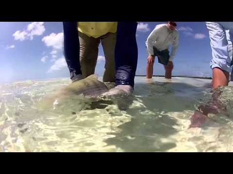 Bonefishing in the British Virgin Islands