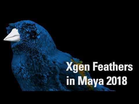 Putting feathers on a Bird in Maya 2018 using Xgen - PakVim