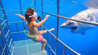 Woah, Great Animal Encounters! | LIFE FUNNY PETS 🐯🐶