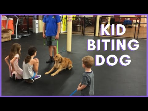 Aggressive kid biting dog Dog Training How To