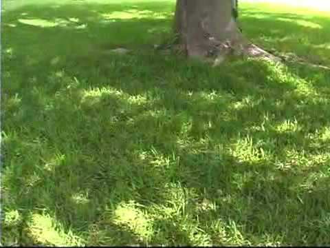 Tips for Growing Grass in Shady Areas