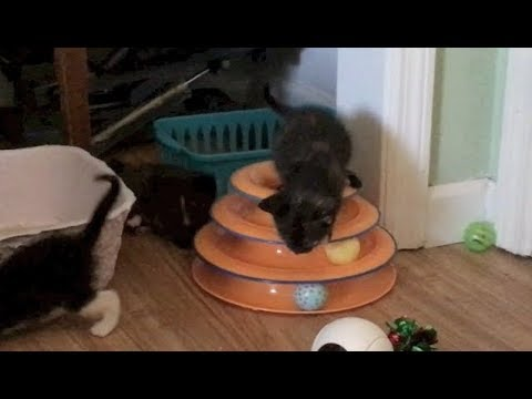 Can You Get Tired Of Kittens? & Mom Supervises Playtime - #20 - Feral Cat Family Socialization