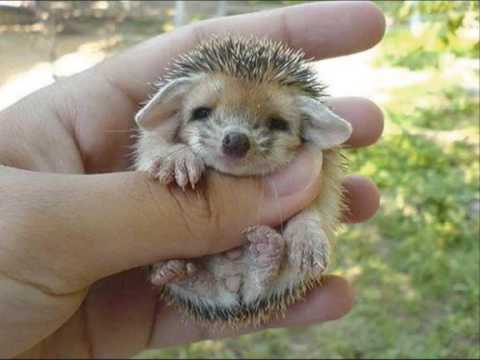 Cute baby hedgehog!!!