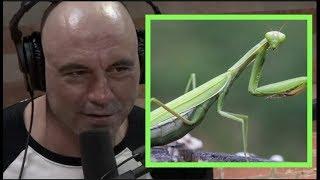 Joe Rogan | What If Bugs Were Big and Intelligent? w/Josh Homme