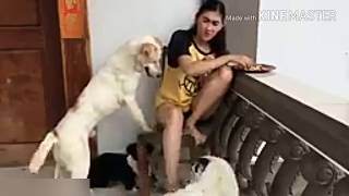 Beautiful girl playing with dogs