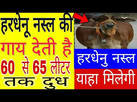 गाय की नयी नस्ल 60 से 65 लीटर तक देती है दूध | हरधेनु नस्ल की गाय| हरधेनु गाय की कीमत