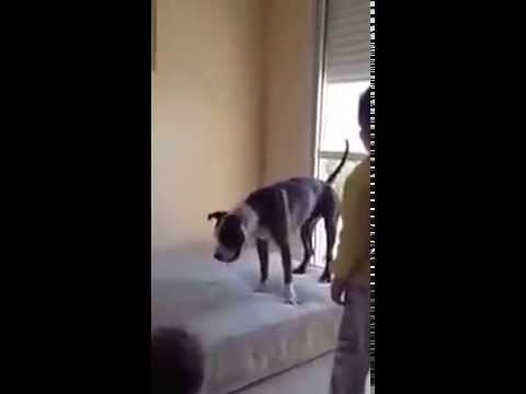 Dog is jumping on a mattress with children