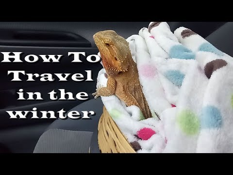 How To Travel With Your Beardie in the Winter