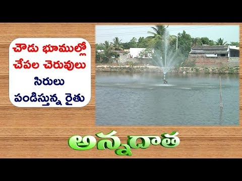 Problematic Soils Transformed to Fish Ponds | Good Earnings with Fish Culture || ETV Annadata