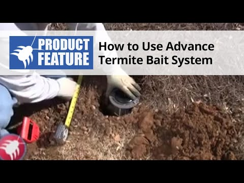 How to Use The Advance Termite Bait Station System to Prevent Termites