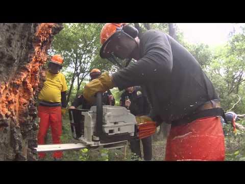 Movie Trailer of Walnut Ridge SBTC Chainsaw Training