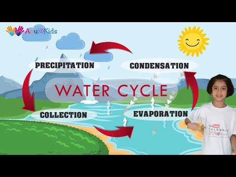 Water cycle | Water cycle for kids