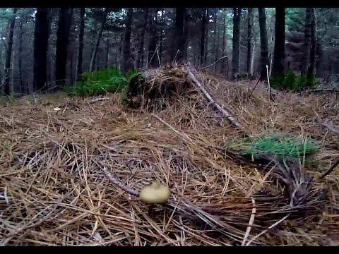 Psilocybin forest FPV