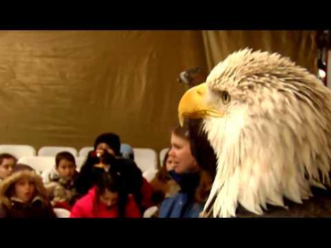 Eagle Days 2010
