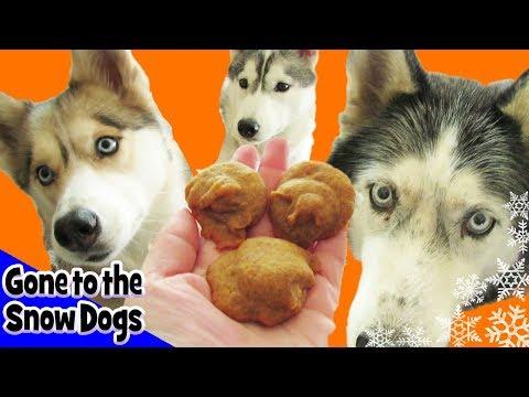 DIY Pumpkin Pie Dog Treats for Halloween   DIY Dog Treats   Snow Dogs Snacks 21