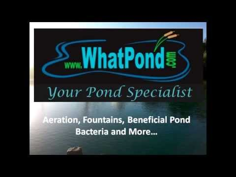 Pond Building to Pond Supplies