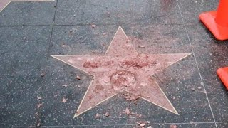 Man destroys Donald Trump