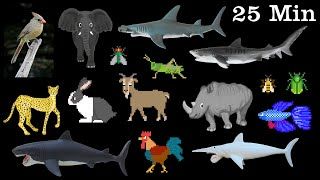 Animals Collection - Sharks, Farm Animals, Pets, Insects & More - The Kids
