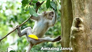 Funny Strong...Janna is trying to learn to climb tree and at away from Jane but....