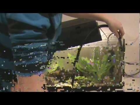 How To Syphon And Clean Your Small Aquarium