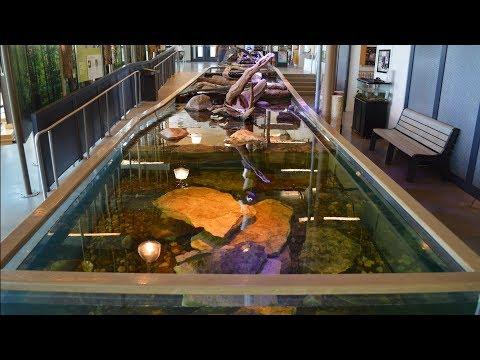 2000 Gallon Living Stream Aquarium