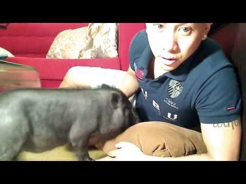 Sanggol, My New Pet Pig