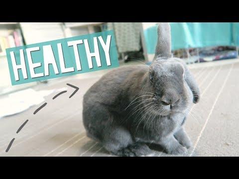 Keeping My Rabbits Healthy Vlog
