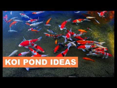 Koi pond design ideas for your backyard
