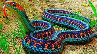 दुनिया के 6 खूबसूरत सांप | Top 6 Most Beautiful Snake In The World