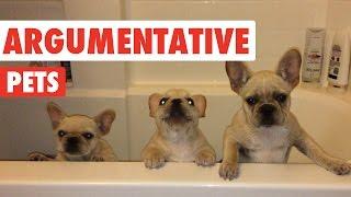 Argumentative Pets Video Compilation 2016