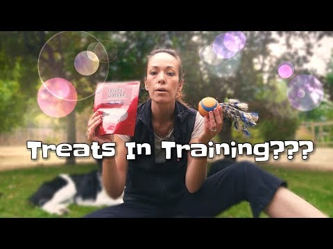 Using Treats In Training