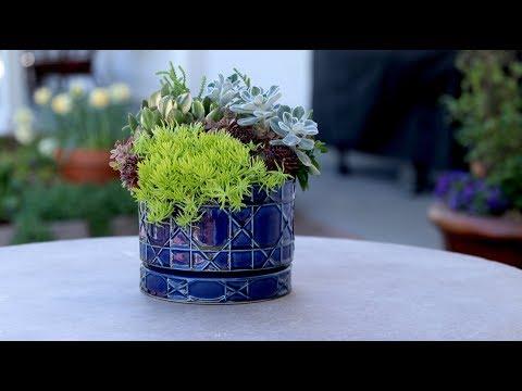 Succulent Inspiration 🌵💙 // Garden Answer