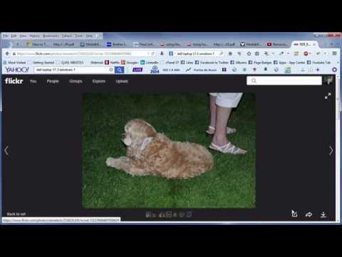 How to Download a Photograph (photo) using New Flickr Interface