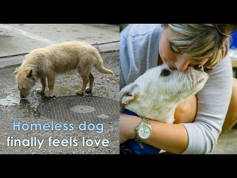 Homeless Dog Living in Parking Lot Finds Perfect Home 5000 Miles Away. A Dog's Happy Ending Story
