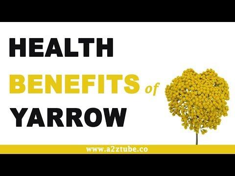 Health Benefits of Yarrow
