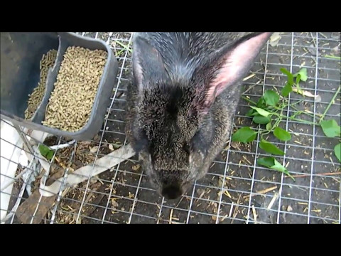 Treating ear mights in Rabbits