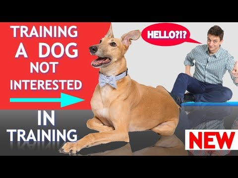 How to Train a Dog Who's Not Interested in Training