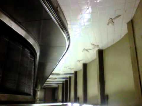 South Ferry Elevator.3GP