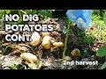 No Dig Potatoes Trial Continued